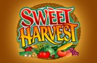 Sweet Harvest